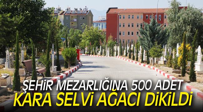 ŞEHİR MEZARLIĞINA 500 ADET KARA SELVİ AĞACI DİKİLDİ