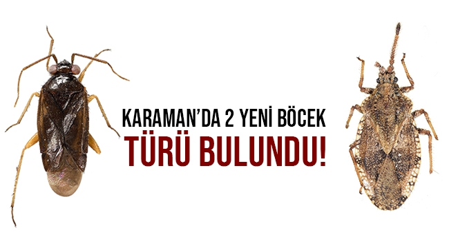 KARAMAN'DA 2 YENİ BÖCEK TÜRÜ BULUNDU!