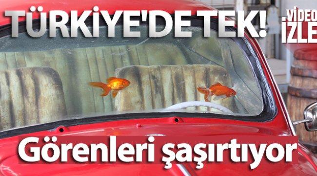 Bu akvaryum Türkiye'de tek