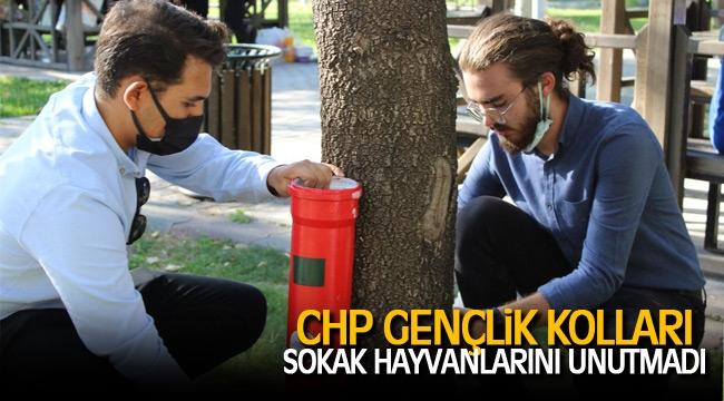 CHP gençlik kolları sokak hayvanlarına mama kabı ve mama dağıtımı yaptı