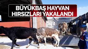 Karaman'daki Büyük Baş Hayvan Hırsızları Şanlıurfa'da Yakalandı